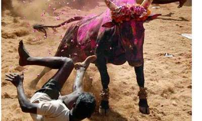 https://cdn0.desidime.com/attachments/photos/312707/medium/835755-Jallikattu-a-bull-taming-006.jpg?1480987824