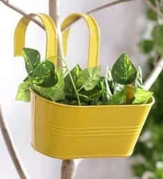 https://cdn0.desidime.com/attachments/photos/522267/medium/5106483green-girgit-yellow-oval-metal-railing-planter-green-girgit-yellow-oval-metal-railing-planter-ie7xsx.jpg?1531320530