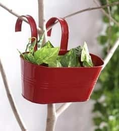 https://cdn0.desidime.com/attachments/photos/545167/medium/5532283green-girgit-oval-railling-planter-small-red-green-girgit-oval-railling-planter-small-red-juq401.jpg?1546675056