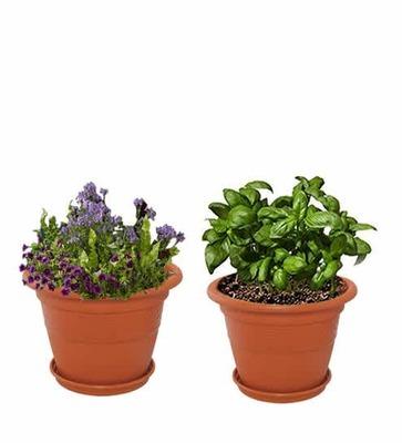 https://cdn0.desidime.com/attachments/photos/576294/medium/5983719brown-plastic-10-inch-heavy-duty-planters-pots---set-of-2-brown-plastic-10-inch-heavy-duty-planters--hbjaug.jpg?1563520259