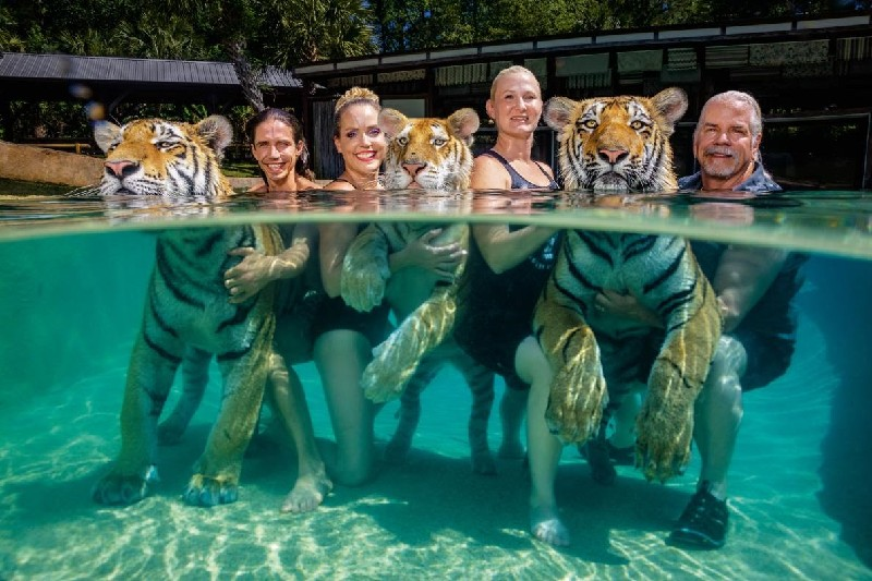 https://cdn0.desidime.com/attachments/photos/613548/original/tiger-show-pool.adapt.1190.1_%281%29_1.jpg?1587360320