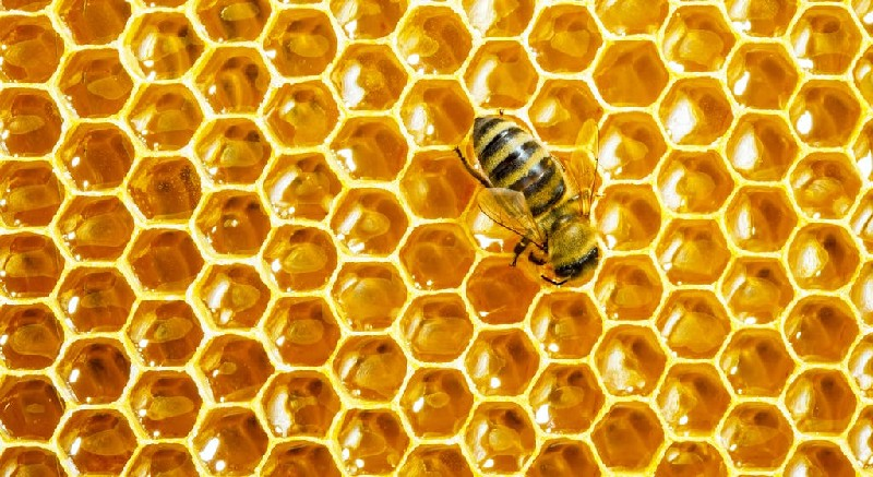 https://cdn0.desidime.com/attachments/photos/613549/original/HoneyHeader1_1.jpg?1587360393
