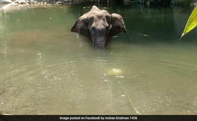 https://cdn0.desidime.com/attachments/photos/619715/medium/6699991cpa6ublo_kerala-pregnant-elephant-dies-facebook_625x300_02_June_20.jpg?1591122193