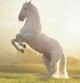 Horses 82a111