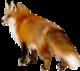 Transparent fox clipart