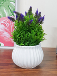 Art Street flowers and plants upto 76% off starting at Rs. 480
